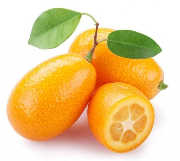 kumquat-1115px-1024px-1024x940